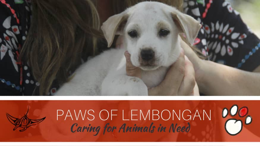 The Work of Paws of Lembongan