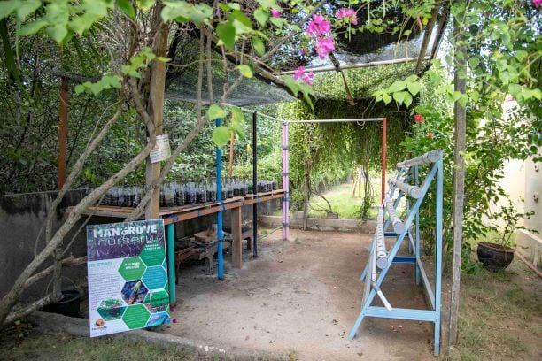 Mangrove nursery at Ceningan Resort