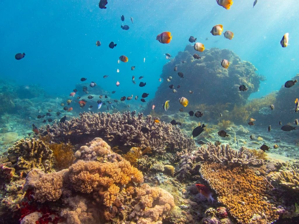 Corals are beautiful but fragile. It may take decades or even hundreds of years to recover.