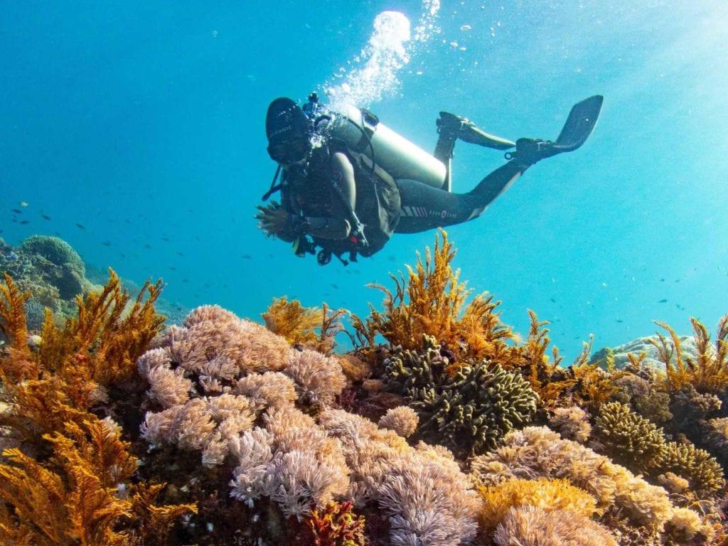 Be an environmentally friendly diver!