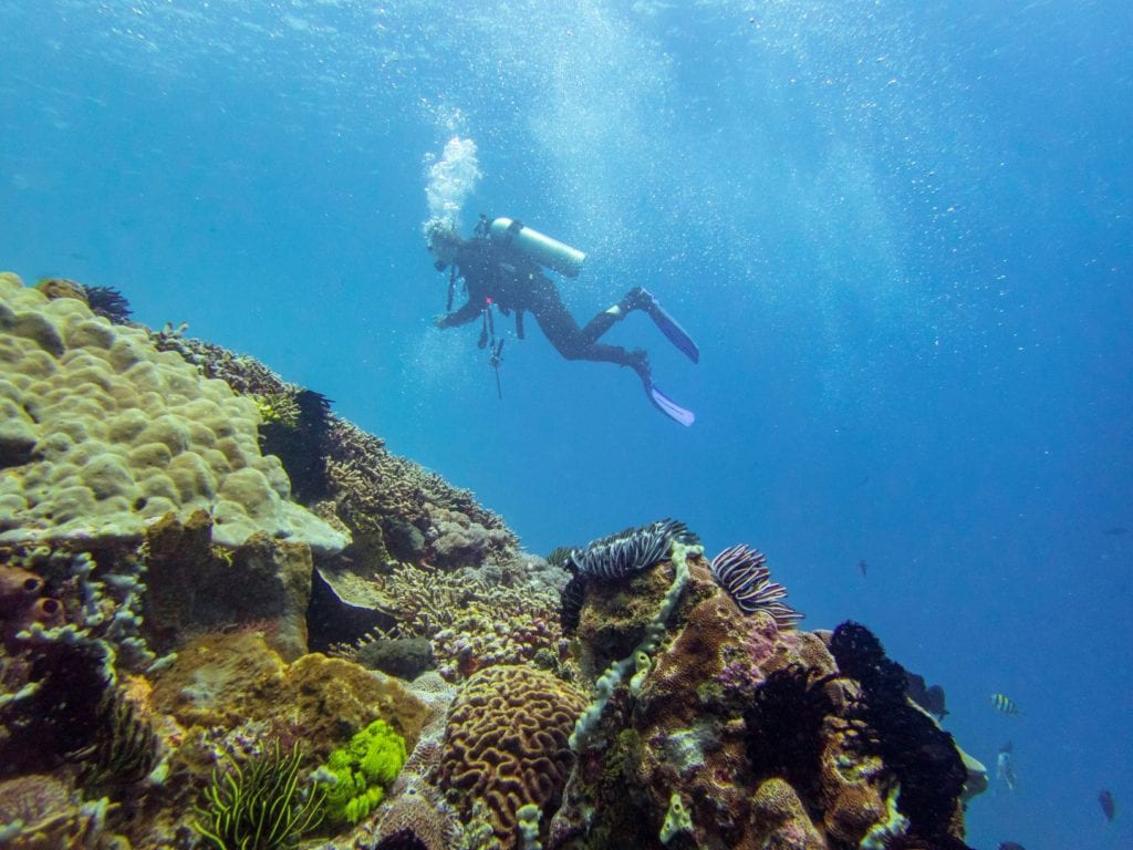 Keep your fins away from the coral and, if conditions allow, float high enough above it