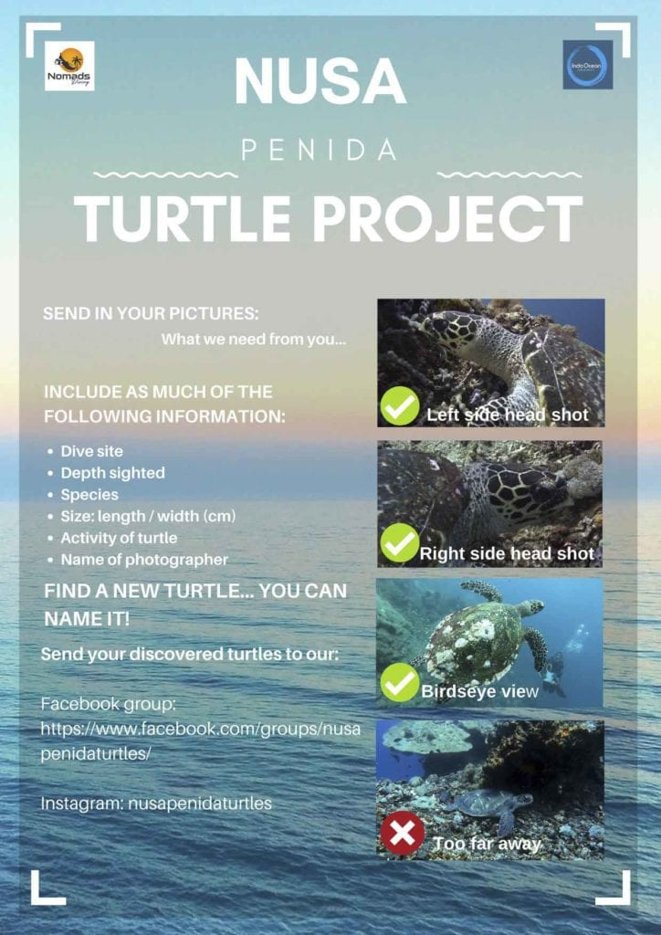 Requested information for submitting your turtle pictures to the Nusa Penida Turtle Project