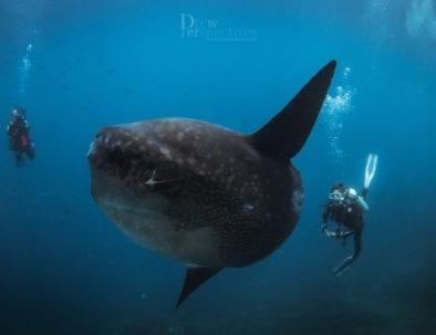 Eco-Friendly PADI Dive Resort